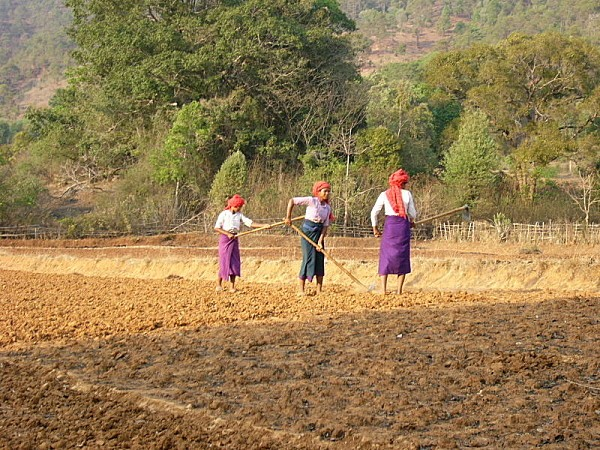 800px-Burmese women working on the fildes