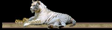 ♥ Le tigre blanc ♥