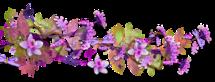 Belles fleurs des champs