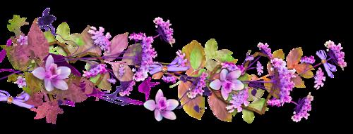 """Résultat de recherche d'images pour """"barre de séparation fleur blog"""""""
