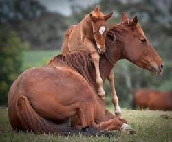 UNE VISITE   aux chevaux..§§