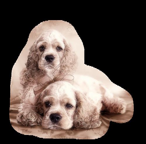 Tubes chiens en png