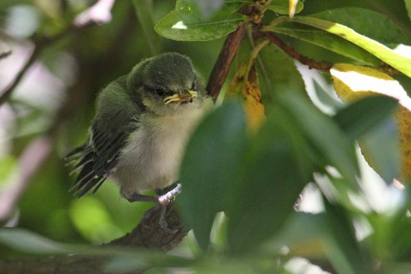 L'atlas des oiseaux nicheurs du grand Paris : c'est parti !