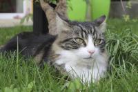vermifuger un chat