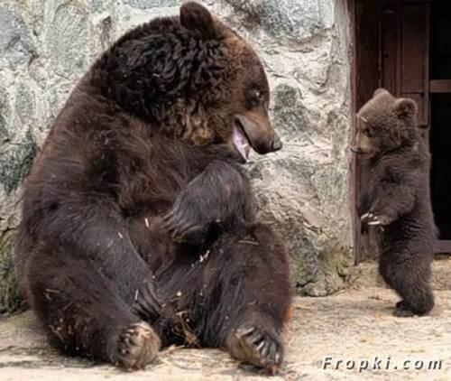 Bébé Ours se fait gronder !!! Une merveille..