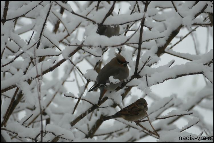Neige, neige et neige.