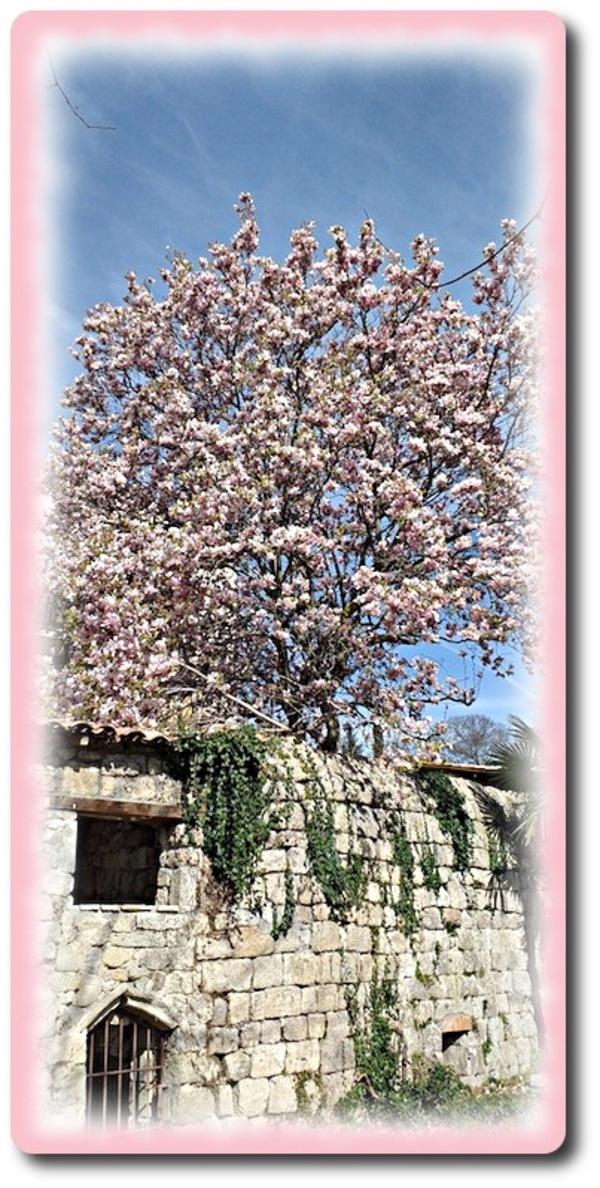 Hey magnolia !