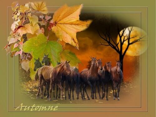 Créations  automne