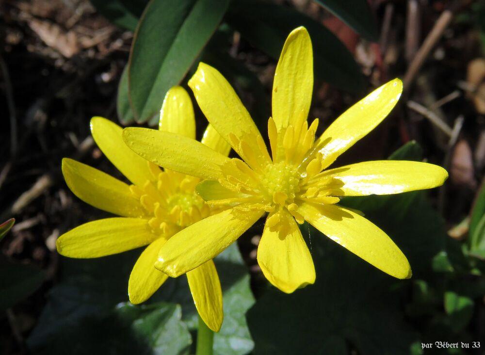 mes fleurs au jardin