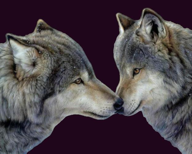 Tubes les loups création 11