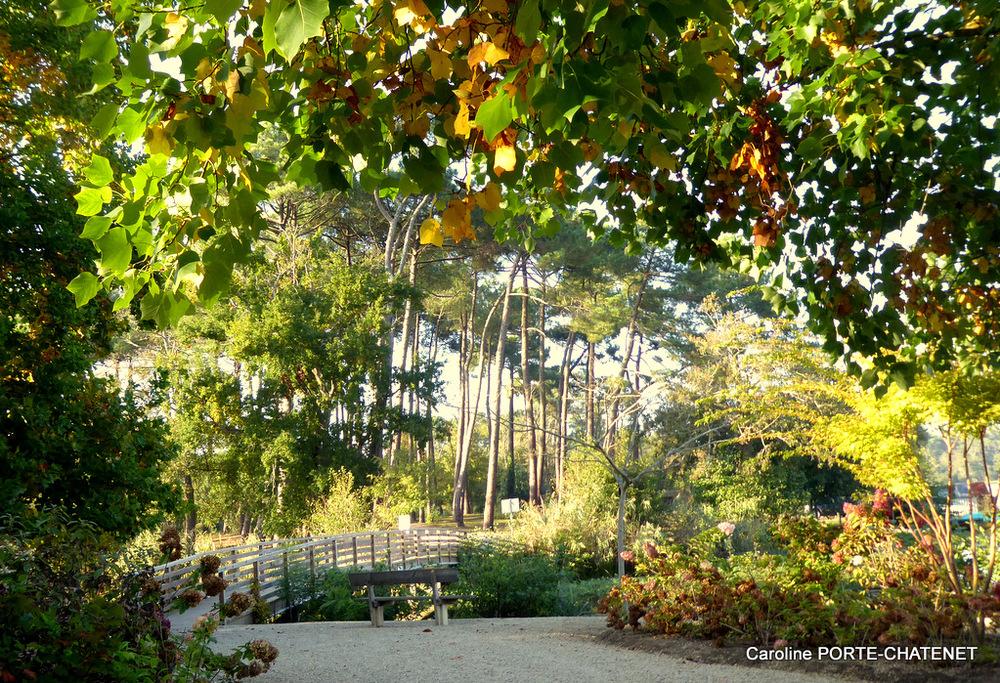 *Images d'automne