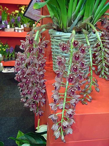 Orchidées 030