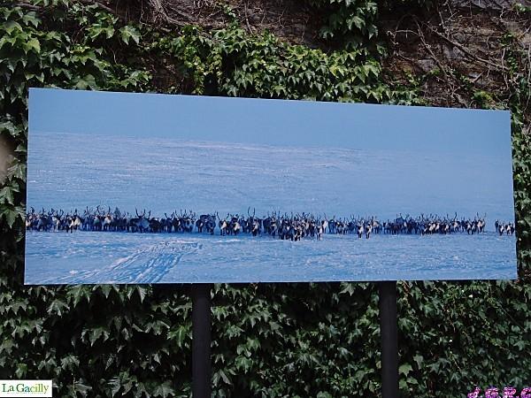 LA--GACILLY---2011-112E.jpg