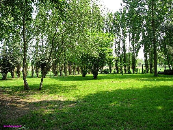 Jardin-042011 0989 (Copier)