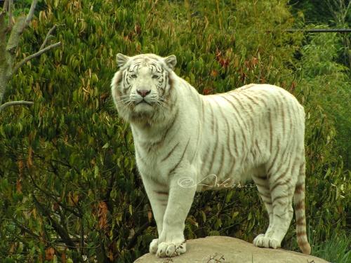 Balade au Zoo
