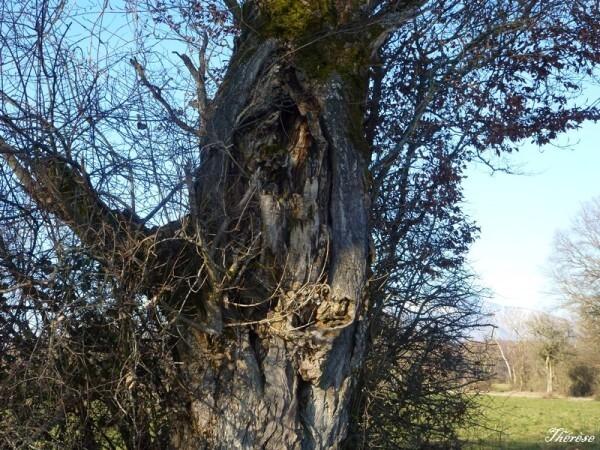 Troncs d'arbres (9)