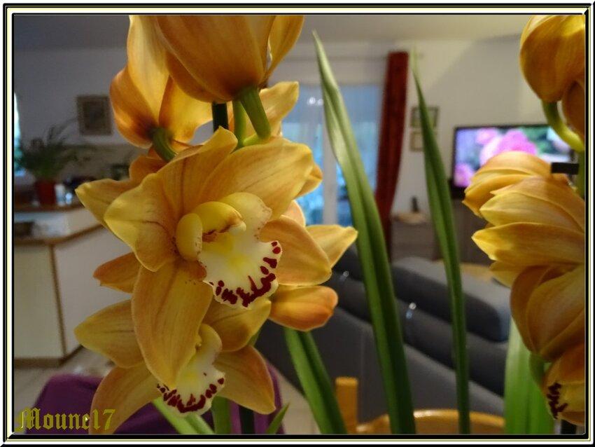 Ds fleurs, des fleurs et .......des fleurs