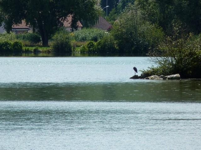 Lac de Vesoul-Vraivre - 5