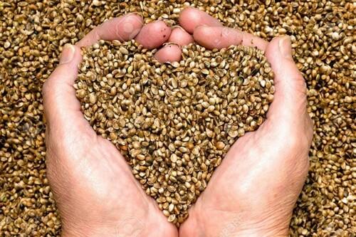 Voici où trouver de bonnes graines
