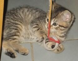 """Un, puis deux, puis trois """"ti lous.."""". et notre petit chat......#2"""