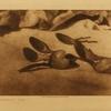 48Elk-horn spoons (Tolowa)