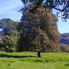 Juillet 2014,notre arbre Rancenay