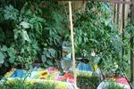 Tomatenhaus von vorn