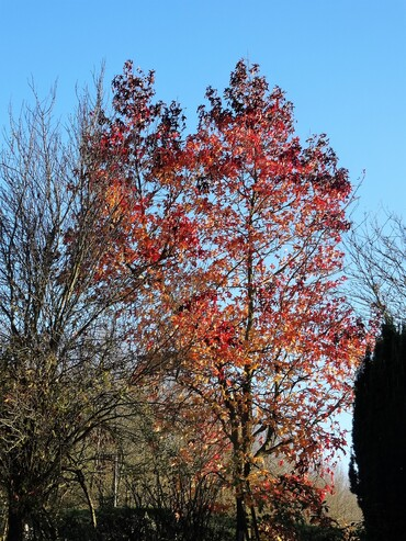 Dernières couleurs de l'automne