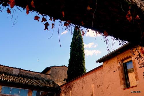 Vigne vierge et volets ... (3)