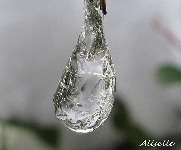 Goutte glacée 2010 #3