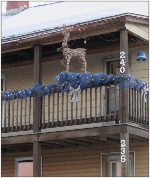 Petit renne en pause avant de faire partie de l'attelage du Père Noël......