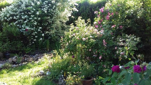 Le bal des roses
