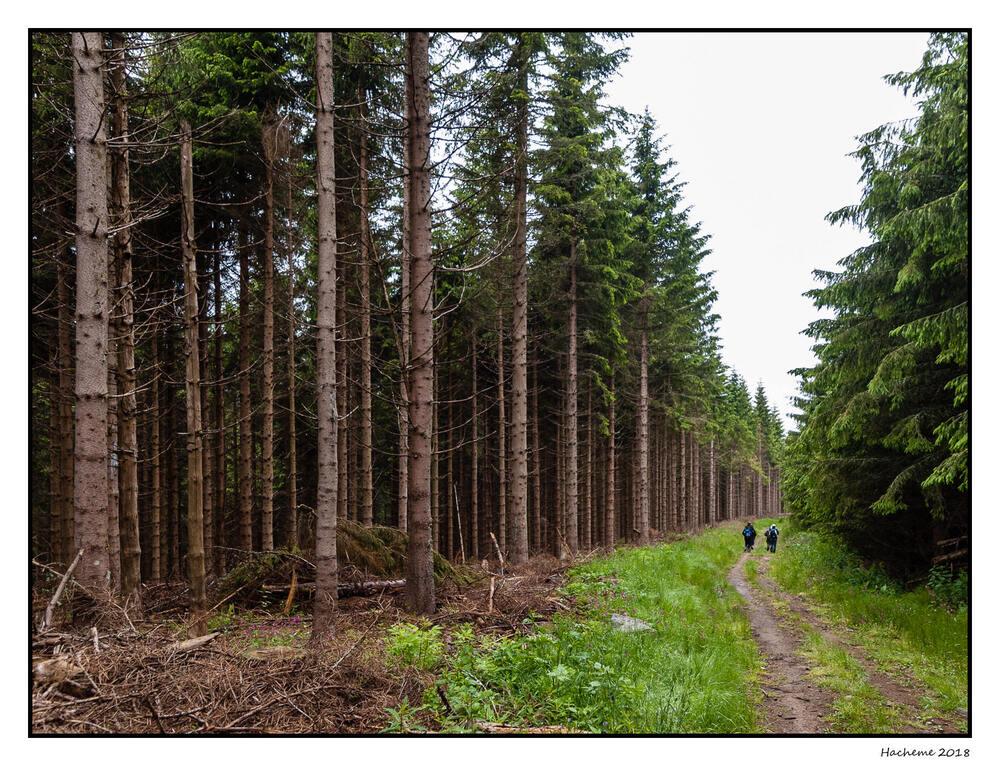 Forêt de Mazan