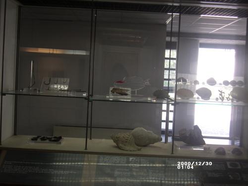 Vitrine marine au musée de Boscoréale
