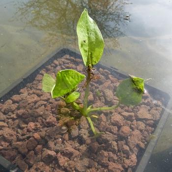 Les plantations du bassin...