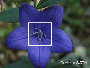 fleur ressemblant à une ballerine