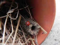Abris pour insectes