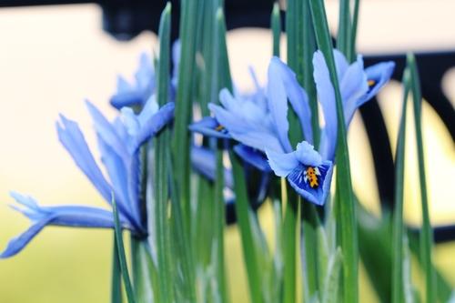 La fleur du jour
