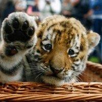 Les animaux cro mignon!