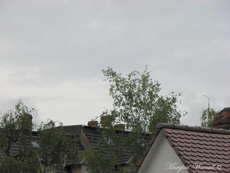 Ciel d'Alsace 418