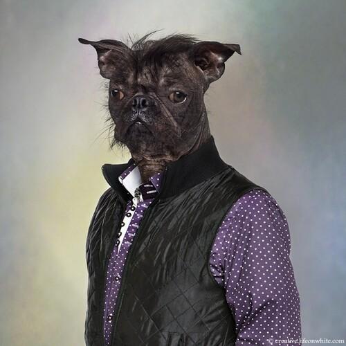 Chien | Croisé chien nu