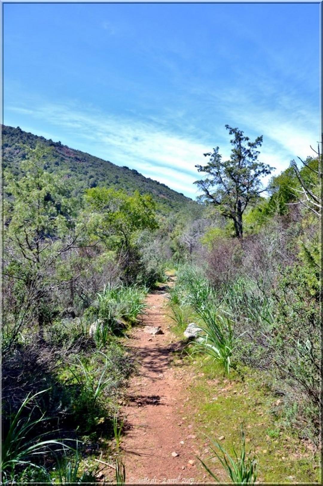 Sentier le long du Fango - Corse