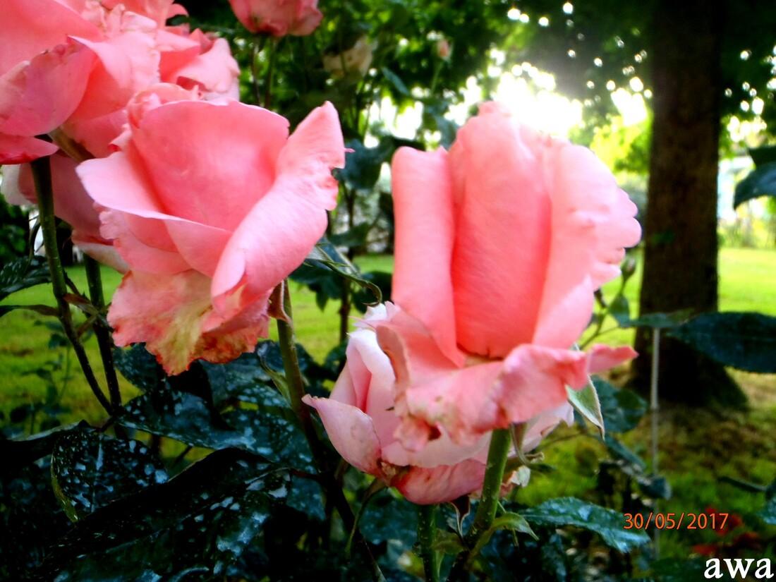 Superbes fleurs !!!