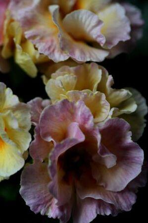 Famiflora mi-février