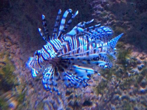 sorties aquarium et réserve naturelle