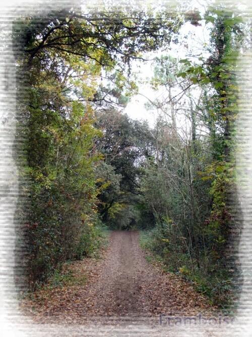 La Forêt d'Escoublac La Baule