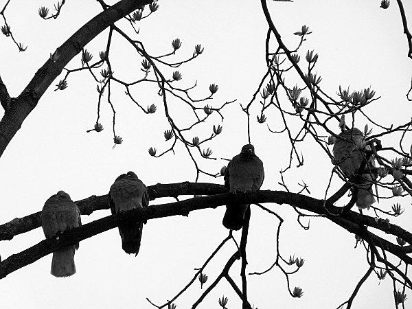 prem neige fleurs 078