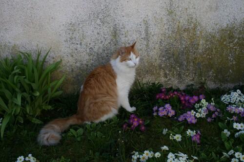 Un chat , du soleil et des fleurs .