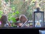 Eichhörnchen springt