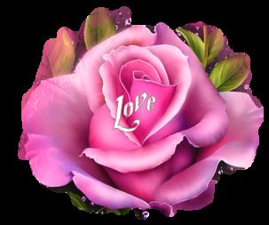 Papiers**Roses écloses**